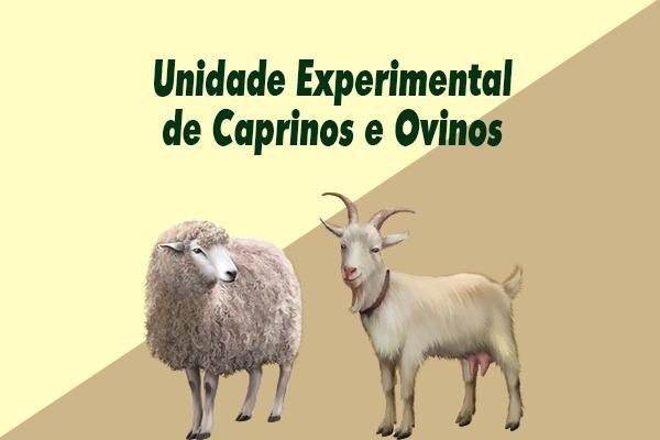 ueco-unidade-de-caprinos-e-ovinos
