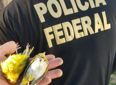 Operação da PF cumpre mandados no sudoeste da Bahia e em Minas Gerais