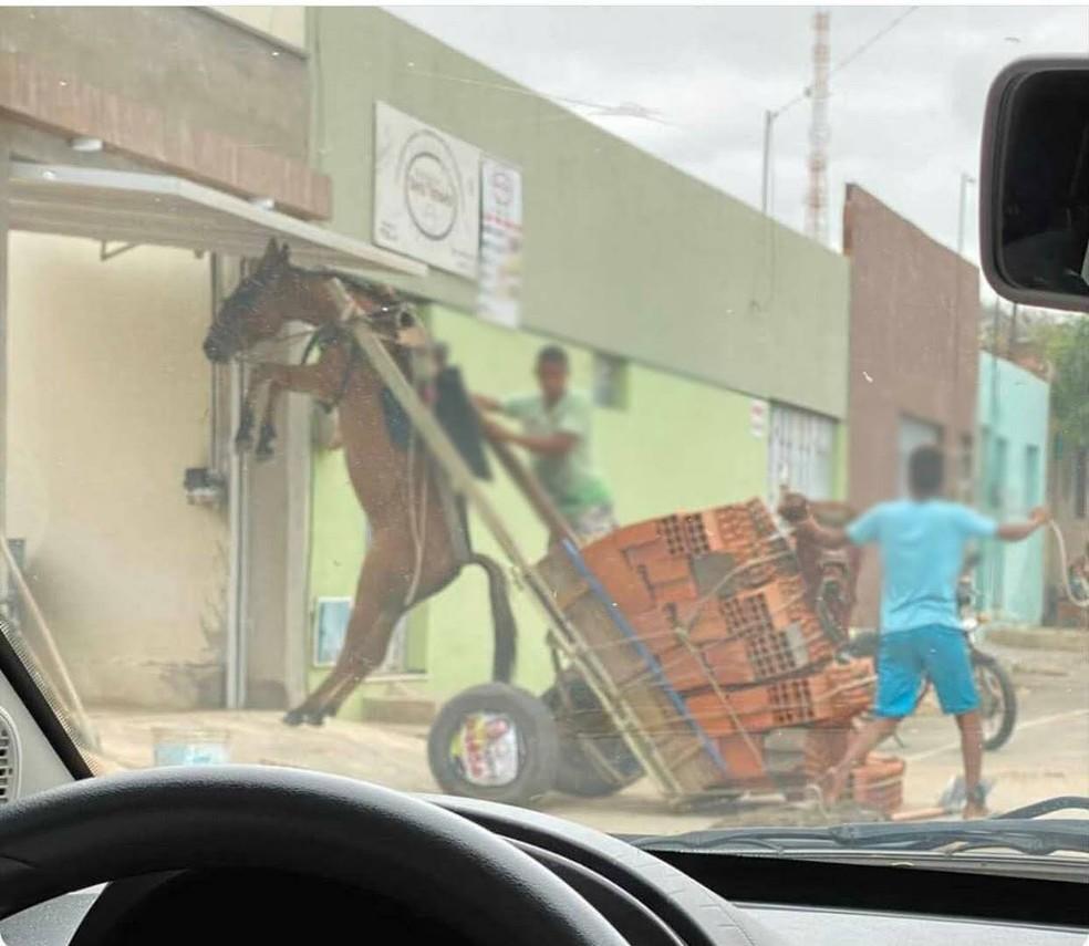 Burro fica suspenso em carroça com excesso de peso em Juazeiro do Norte; polícia ambiental notificou responsável