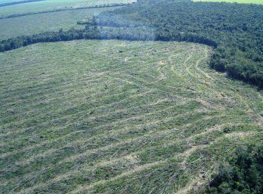 Desmatamento da Amazônia em março bate recorde e é o maior dos últimos seis anos