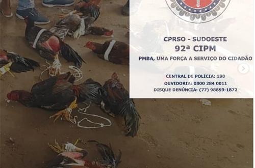 Conquista: Polícia acaba com rinha de galo em sítio